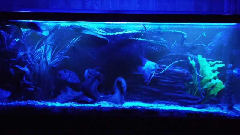 akvarium02.jpg