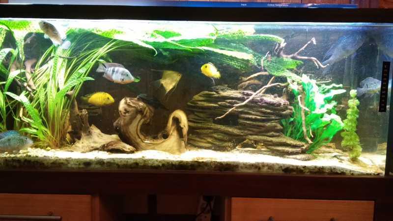 akvarium03.jpg