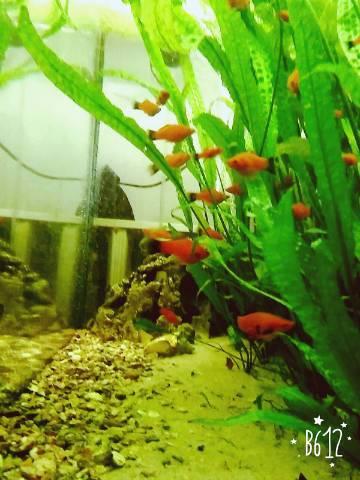 photo_elado-piros-platti_20438677.jpg