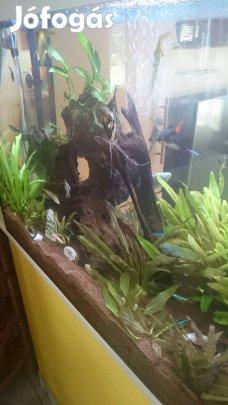 Akvarium_200_literes_59885496013176.jpg